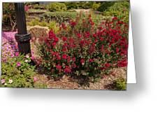 Garden Bush At Woodward Park 2f Greeting Card