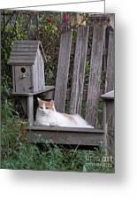 Garden Cat Greeting Card