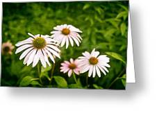 Garden Dasies Greeting Card