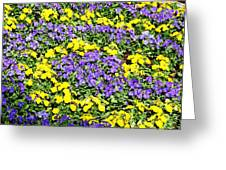 Garden Design Greeting Card