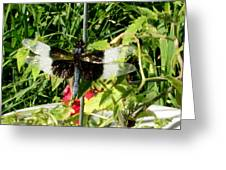 Garden Dragonfly Greeting Card