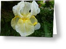 Garden Fairy Of Sunset Greeting Card