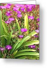 Garden Flowers Greeting Card