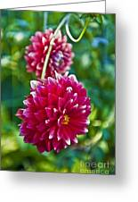 Garden Flowers Red Pink Getty Center   Greeting Card