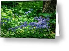 Garden Flox Greeting Card