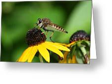 Garden Fly Greeting Card
