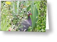 Garden Hen Greeting Card