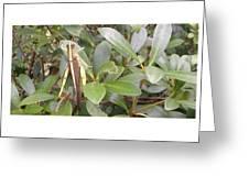 Garden Hopper Greeting Card
