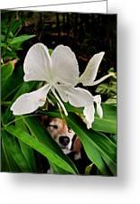 Garden Hound Greeting Card