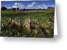 Garden In The Glades Greeting Card