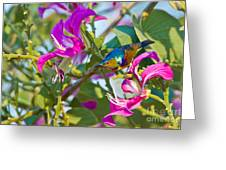 Garden Jewels Greeting Card by Ashley Vincent