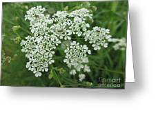 Garden Lace Greeting Card