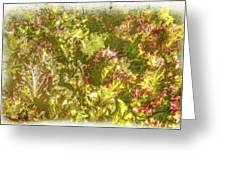 Garden Lettuce - Green Gold Greeting Card