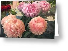 Garden Of Mixed Pink Chrysanthemums Greeting Card