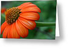 Garden Passion  Greeting Card