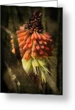 Garden Poker Flower Greeting Card