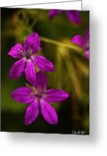 Garden Raindrops Greeting Card