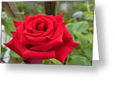 Garden Red Rose Greeting Card