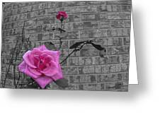 Garden Rose Greeting Card