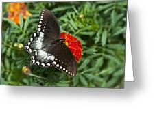 Garden Spice Butterfly Greeting Card