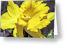 Garden Sun Greeting Card