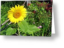 Garden Sunflower Greeting Card
