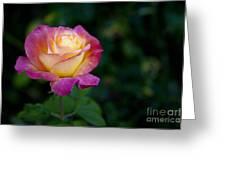 Garden Tea Rose Greeting Card