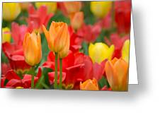 Garden Torches Greeting Card