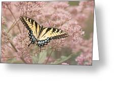 Garden Visitor - Tiger Swallowtail Greeting Card