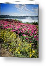 Garden With A View Niagara Falls Greeting Card