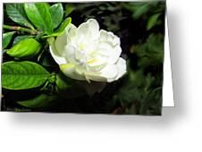 Gardenia 2013 Greeting Card