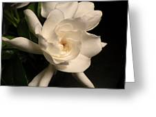 Gardenia Blossom Greeting Card by Deborah Smith