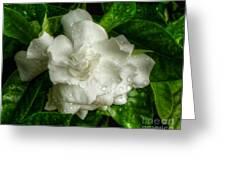 Gardenia In The Rain Greeting Card
