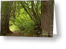Garibaldi Old Growth Cedars Greeting Card