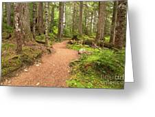 Garibaldi Path To Cheakamus Lake Greeting Card
