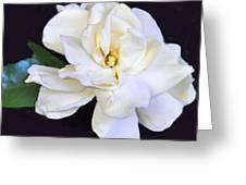 Garidenia In Black Greeting Card
