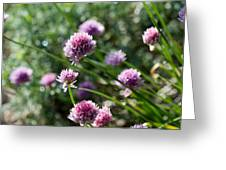 Garlic Chives Flowers Greeting Card