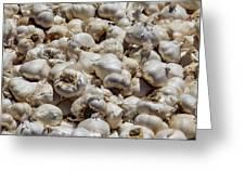 Garlic Harvest Greeting Card
