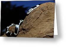 Garter Snake Genus Elapsoidea Greeting Card