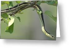 Garter Snake In Apple Tree Greeting Card