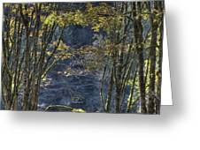 Gate Way To The Winters Forest Greeting Card by Donald Torgerson
