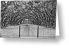 Gateway To The Old South Bw Greeting Card by Steve Harrington