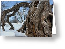 Gateway To The River Bottoms Greeting Card