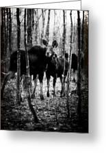 Gathering Of Moose Greeting Card