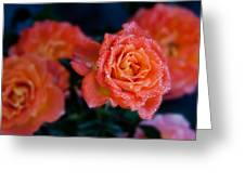 Gathering Of Roses Greeting Card