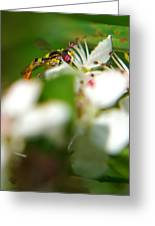 Gathering Of The Pollen Greeting Card