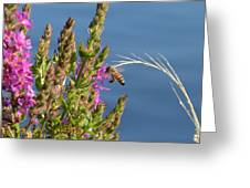 Gathering Pollen 1 Greeting Card