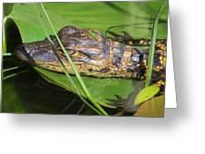 Gator Baby's Head Greeting Card