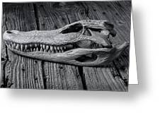 Gator Black And White Greeting Card