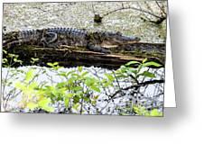 Gator Camoflage Greeting Card